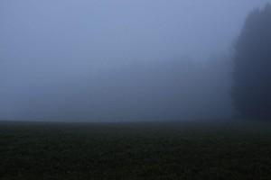 Wald im Nebel (c)2014 Thomas Hümmler - München - Grafing