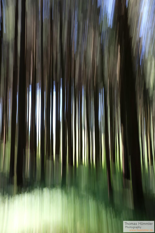 Im Wald (c)2015 Thomas Hümmler – München · Grafing